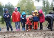 sadzenie_zonkili_pielgrzymowice_2015-10-21_121