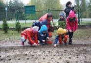 sadzenie_zonkili_pielgrzymowice_2015-10-21_122